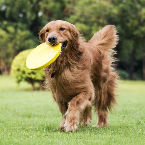 Golden Retriever Playing - WoofWell